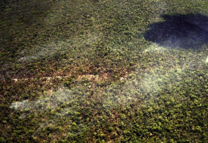 Los incendios forestales han afectado 58 hectáreas de vegetación arbustiva. (Harold Alcocer/SIPSE)