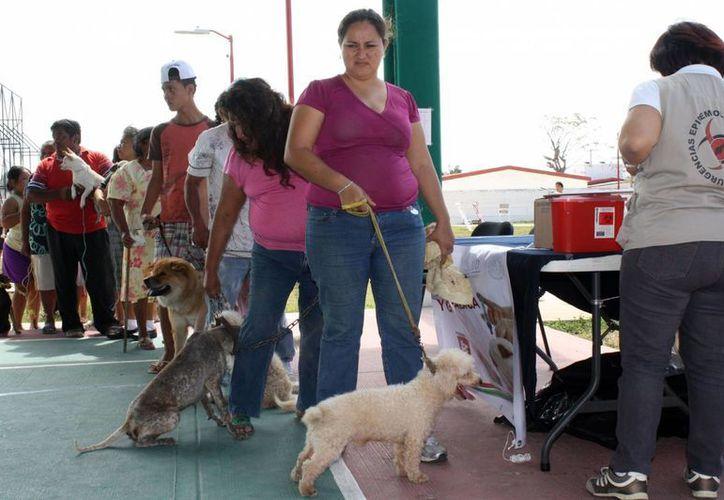 El objetivo es vacunar alrededor de 48 mil 837 perros y gatos en la capital de Quintana Roo. (Enrique Mena/SIPSE)