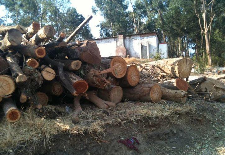 Son muchas las plagas de la madera que deben ser combatidas. (www.procontreras.org/Contexto)