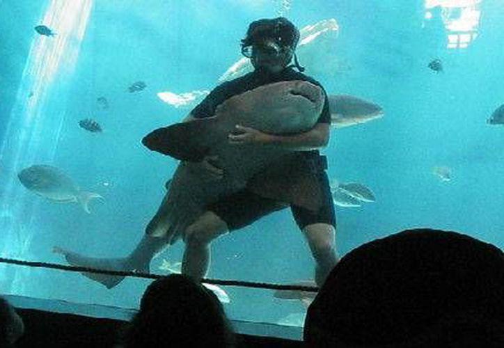 Los tiburones se encontraban en un área de 763 mil litros conocido como El Tiburonario. (Contexto/Internet)