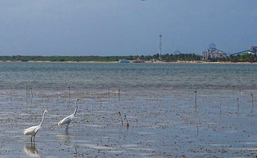 En punta Nizuc se une la laguna Nichupté con el mar. (Foto: Laura Ortíz).
