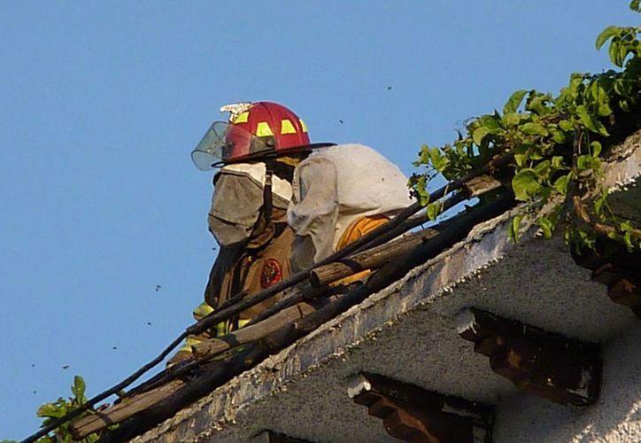 """En abril de este año, los """"traga humo"""" atendieron 52 llamadas por enjambres de abejas. (Licety Díaz/SIPSE)"""