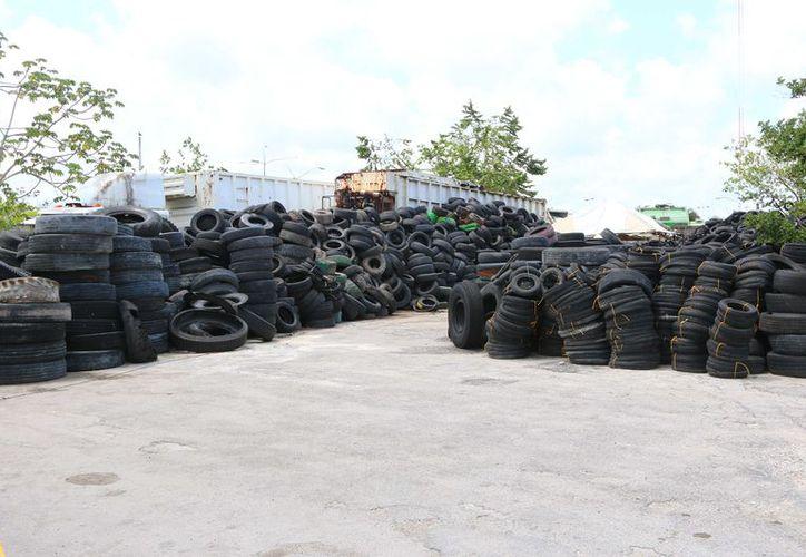 Vecinos alertaron sobre la cantidad de llantas que existe en Camar y  la basura que es tirada en terrenos baldíos. (Gustavo Villegas/SIPSE)