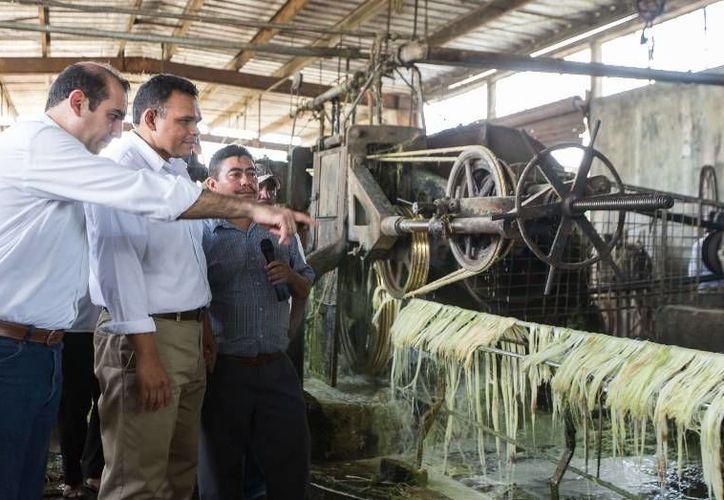 Ayer, el Gobernador entregó estímulos económicos y de fomento para nuevas siembras a más de 700 productores henequeneros del estado por más de 5.1 mdp. (Cortesía)