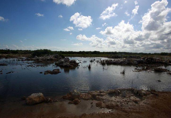 Protegerán especies que se refugian en los manglares. (Sergio Orozco/SIPSE)