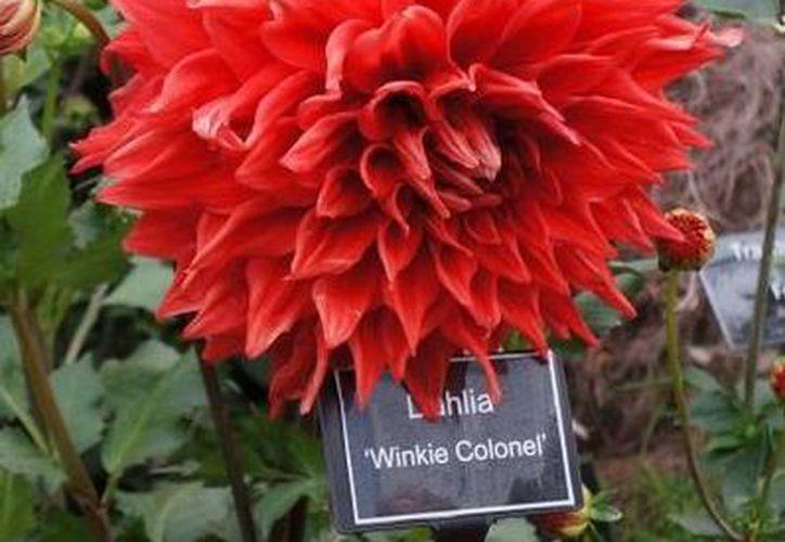 Un jardín surrealista mexicano gana oro en el concurso de horticultura Chelsea Flower Show. (Fotografía: Notimex)