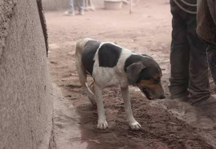 El perro vivía con sus dueños en la aldea de San Jaime, Antigua Guatemala. (Milenio)