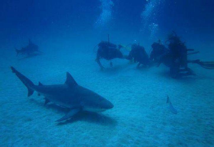 En Playa del Carmen hay 100 comercios que se encargan de entrenar a quienes quieran sumergirse en las profundidades del Mar Caribe. (Redacción/SIPSE)