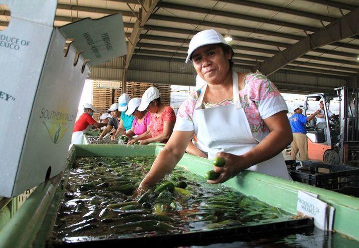 El viernes pasado trabajadores de la empresa Valle del Sur, en Tekax, resultaron intoxicados. (José Acosta/SIPSE)