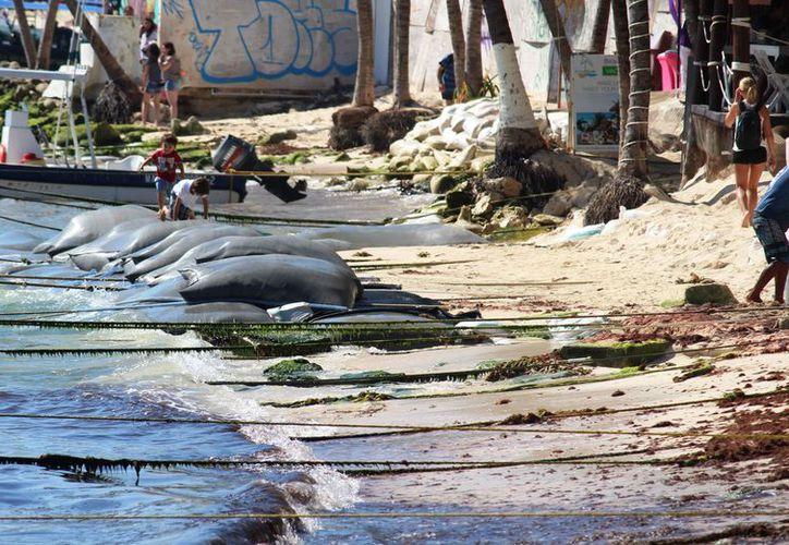 La erosión en una gran zona ha mermado el flujo de arena. (Octavio Martínez/SIPSE)