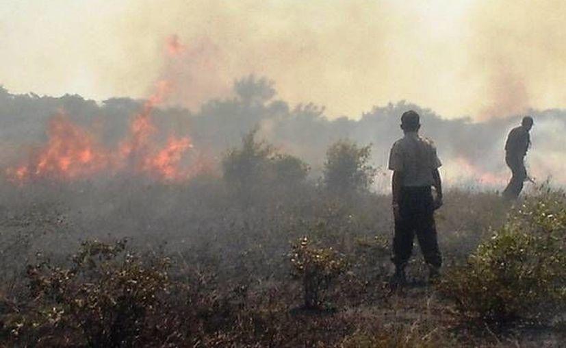 En Yucatán cada vez hay más incendios por falta de educación y porque las sanciones son 'suaves'. (SIPSE/Archivo)
