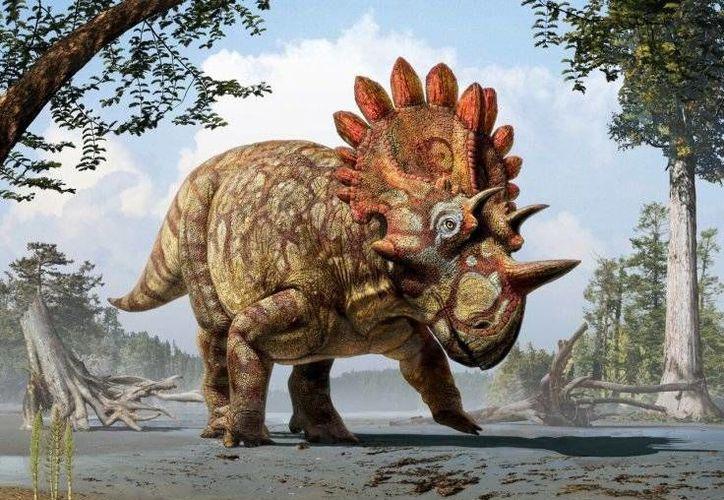 Esta es una recreación del aspecto que habría tenido el Regaliceratops peterhewsi, descubierto hace una década en el fondo del río Oldman, en Canadá. (Royal Tyrrell Museum)