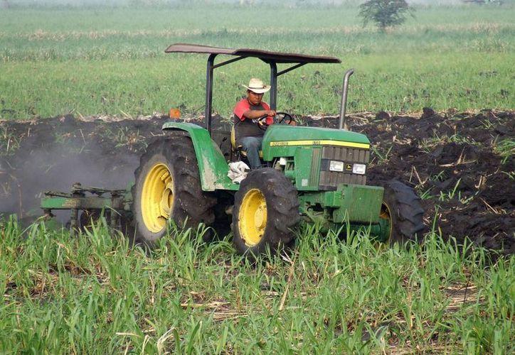 Los líderes agrarios se comprometen a promover el aumento de alimentos básicos. (Archivo/SIPSE)