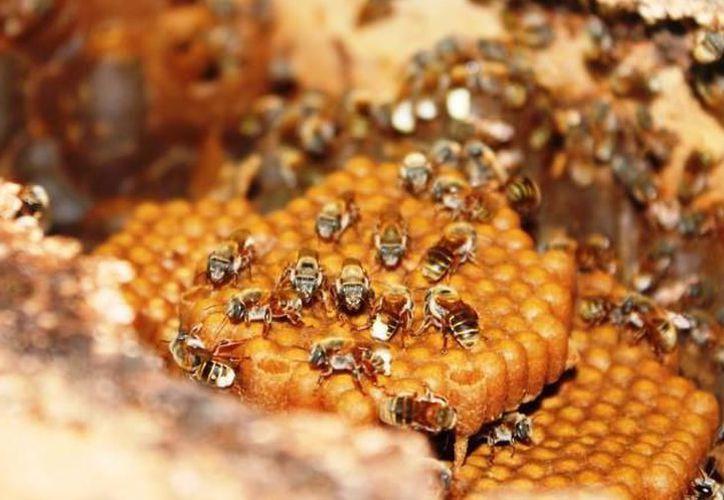 90% de la miel yucateca se exporta principalmente a la Unión Europea y a Arabia Saudita. (Milenio Novedades)