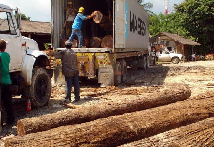 """El 10 de julio próximo, integrantes de la industria maderera acudirán a dos """"expos en Alemania"""", patrocinados por la Comisión Nacional Forestal (Conafor). (Milenio Novedades)"""
