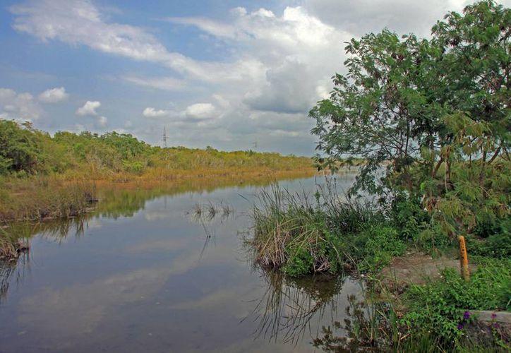 El relleno de zona urbana resulta en afectación a la zona de mangle en Chetumal. (Enrique Mena/SIPSE)