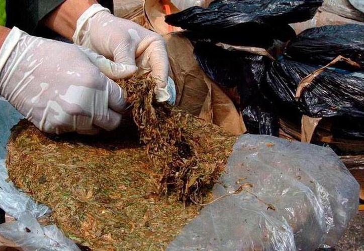 La policía aseguró 12.5 kilogramos de marihuana, en las instalaciones de una empresa de mensajería. La droga quedó a disposición del MP. La imagen no corresponde al hecho, es únicamente de contexto. (SIPSE)