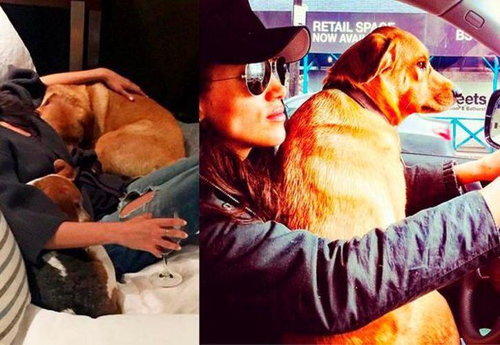 """El perro fue adoptado en Canadá, cuando la actriz estaba grabando la serie de televisión """"Suits"""". (Foto: Instagram)"""