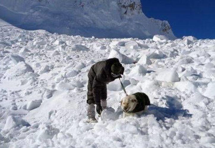 Este domingo se suscitó una avalancha en Pakistán, dejando un total de siete muertos y ocho heridos, por el momento. La foto pertenece a una pasada avalancha en ese país.(Archivo/AP)