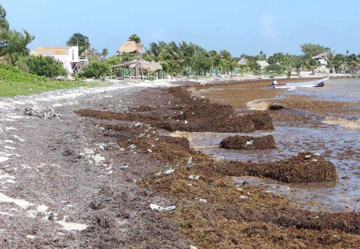 Empresarios de la Costa Maya requieren atención con urgencia, pues la actividad turística está a punto de colapsar. (Joel Zamora/SIPSE)