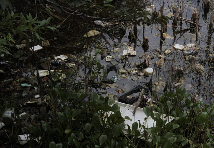 Las personas personas que llegan a visitarlo, arrojan basura sin la mínima precaución. (Tomás Álvarez/SIPSE)