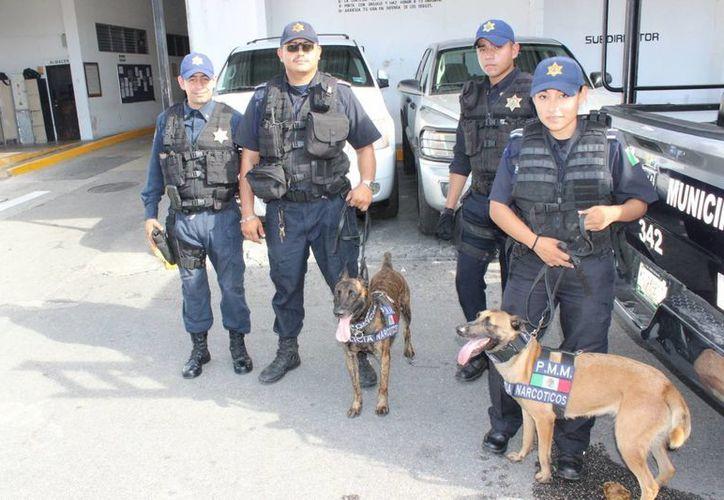 Dos perras de la Policía de Mérida fueron reconocidas internacionalmente por su labor en la detección de narcóticos. (Foto cortesía del Ayuntamiento de Mérida)