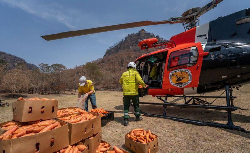 Foto: Gobierno de Nueva Gales del Sur.