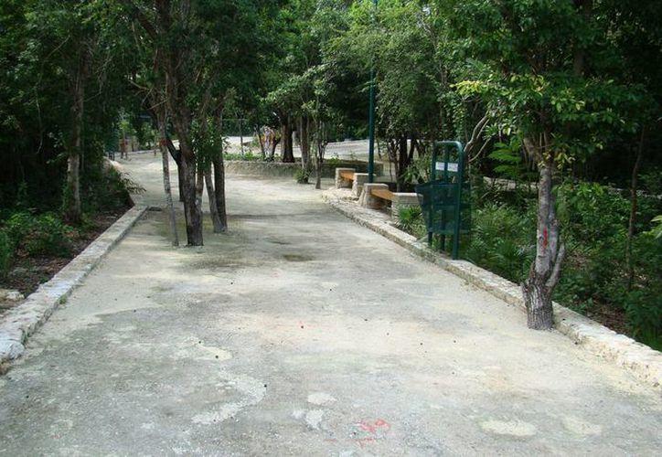 El vivero tiene una extensión de 100 por 35 metros, y está en la fase de preparación de almacenaje de plantas nativas. (Miguel Ángel Ortiz/SIPSE)
