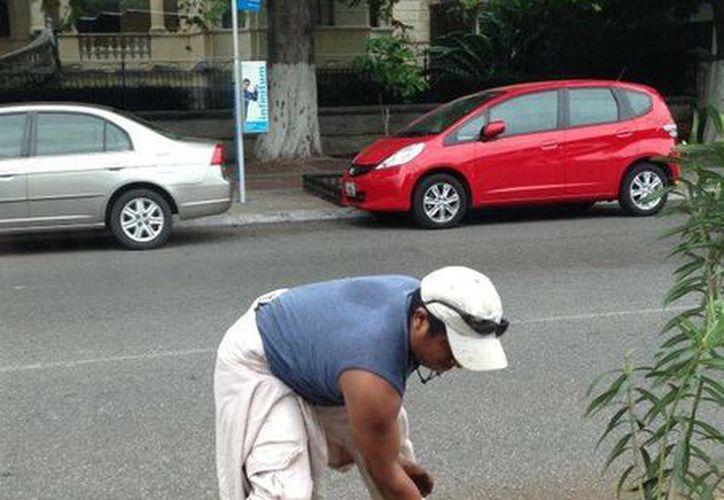 Entre los preparativos del Carnaval está el retiro de plantas en el Paseo de Montejo. (SIPSE)