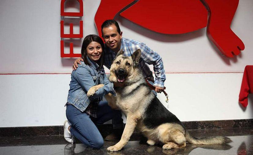 La Policía Federal a la Federación Canófila Mexicana dio en adopción a 28 perros policías jubilados. (Notimex)