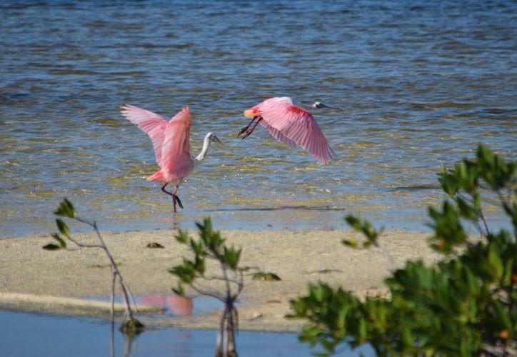 México y Cuba tienen en común arrecifes, fauna marina y corrientes oceánicas. (Gustavo Villegas/SIPSE)