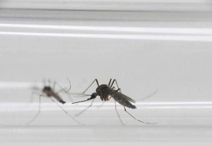 Una mujer de Nueva York infectó a su pareja masculina con el virus de zika por medio de relaciones sexuales. (AP/archivo)