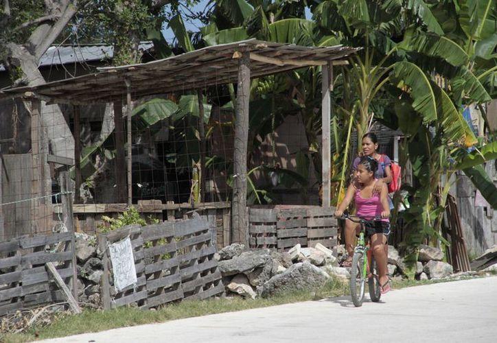 Las casas son construidas con láminas, cartones y maderas. (Tomás Álvarez/SIPSE)