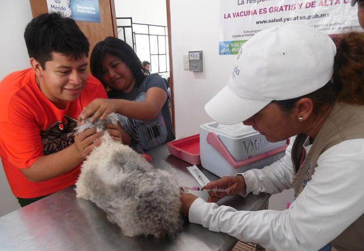 El módulo veterinario del Ayuntamiento de Mérida trabaja a toda la capacidad a través de consultas de mascotas durante todos los días. (Cortesía)