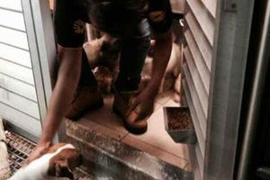 Atienden a animales <em>atrapados</em> en tienda clausurada