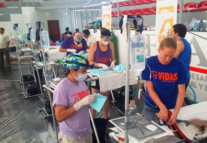 La meta es esterilizar a mil 623 perros y gatos del municipio de Solidaridad. (Daniel Pacheco/SIPSE)