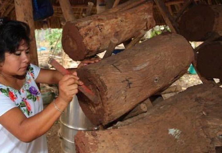 Desde antes de la Conquista de los españoles los mayas obtenían miel de las abejas meliponas. (veoverde.com)