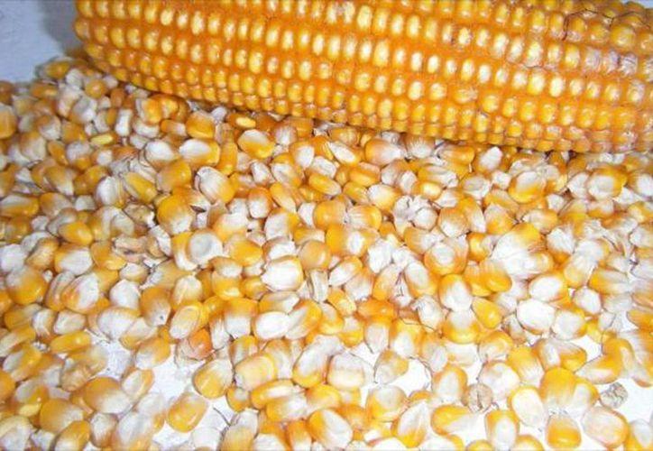 Diconsa disminuyó el precio de venta del kilo de maíz en 50 centavos, al pasar de 4.50 a 4 pesos. (Archivo SIPSE)