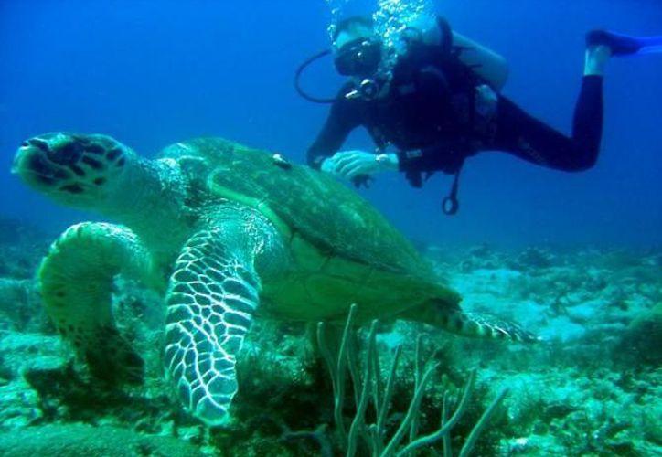 Cozumel es un destino fuerte en buceo y se buscará consolidarlo en este sector turístico. (Pasaportemaya.net)