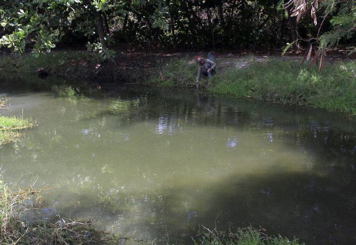 La dependencia debe realizar un monitoreo sobre la calidad del agua.  (Alejandra Galicia/SIPSE)