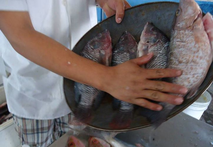 Ingerir productos del mar mal conservados puede provocar todo males estomacales, infecciones o  intoxicaciones. (Rossy López/SIPSE)