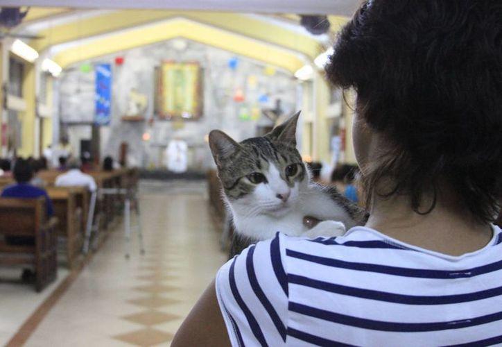 Familias capitalinas asistieron a la iglesia con sus mascotas. (Harold Alcocer/SIPSE)