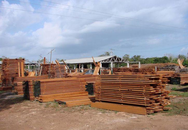 Las modalidades de la madera que se encuentra en el ejido son: preciosas, duras y blandas. (Manuel Salazar/SIPSE)