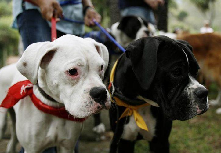 Los canes tienen capacidad para olfatear cargamentos de droga, entre otras actividades. (EFE)