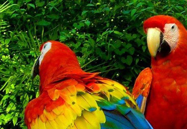 Primero los ejemplares tendrán que recibir un proceso de adaptación para identificar a sus predadores y su comida . (mexicodesconocido.com.mx)
