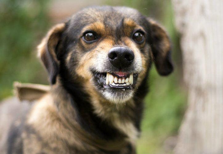 La rabia es una enfermedad que afecta el cerebro de los animales contagiados. (Internet)
