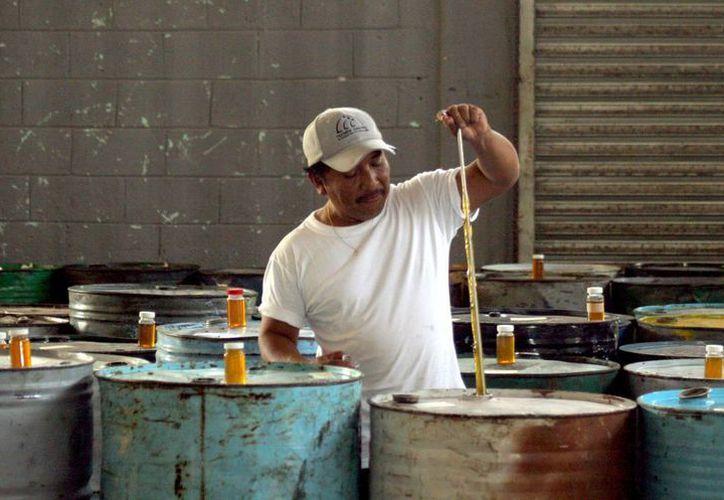 La miel que se produce en Yucatán se exporta a la Unión Europea. (Milenio Novedades)
