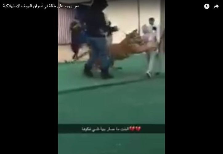 Afortunadamente, el domador logró controlar a la bestia antes de que hiciera daño a la menor. (Captura de pantalla/YouTube)