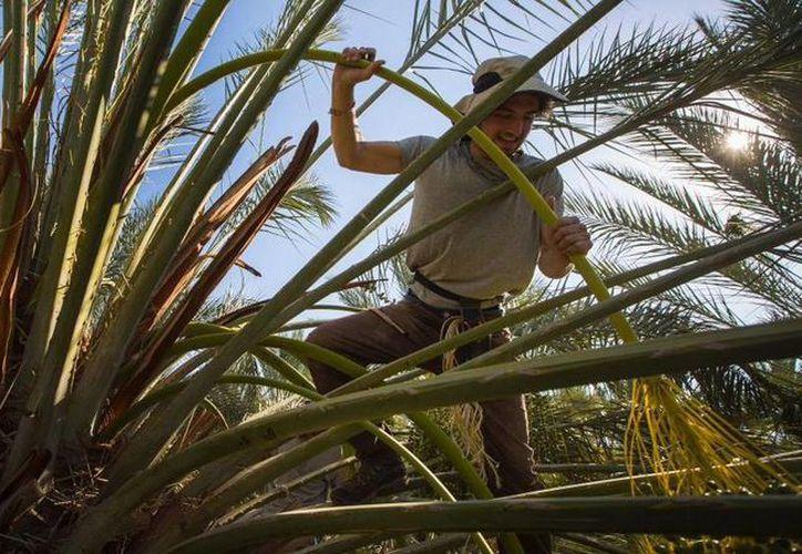 Imagen publicada por Brian Cassella, quien paso un tiempo en Israel y participó en las actividades de agricultura en el desierto de Arava. (twitter.com/briancassella)