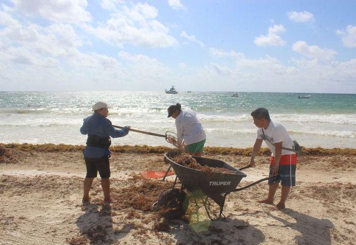 Zofemat sólo atiende limpieza de playas públicas. (Foto: Sara Cauich/SIPSE)